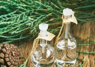 Масло кипариса в лечении и косметологии: свойства, рецепты, противопоказания