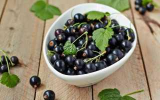 Черная смородина: рецепты при простуде, авитаминозе и других недугах
