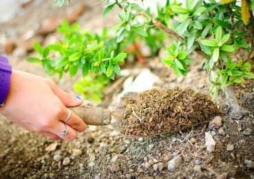 Органика или минеральные удобрения: плюсы и минусы, правила внесения