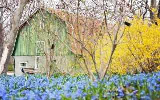 Цветочные фонтаны форзиции: посадка, подкормка, обрезка