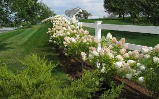 Подбираем эффектные кустарники для создания живой изгороди