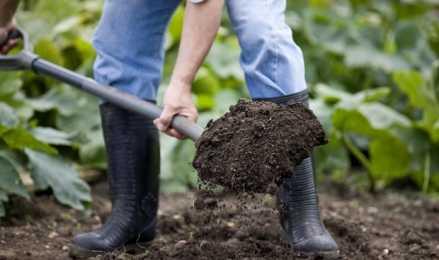 Роль фосфорных удобрений в выращивании урожая