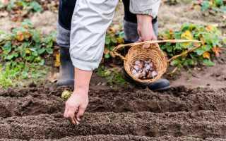 Посадка цветов под зиму: сроки и инструкция