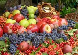 Группы биопрепаратов от вредителей и болезней растений