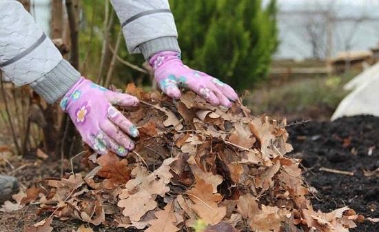 Использование опавшей листвы