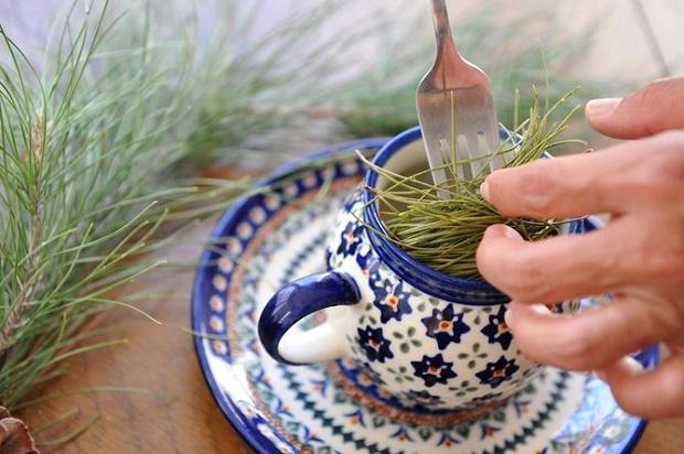 Целебный хвойный чай
