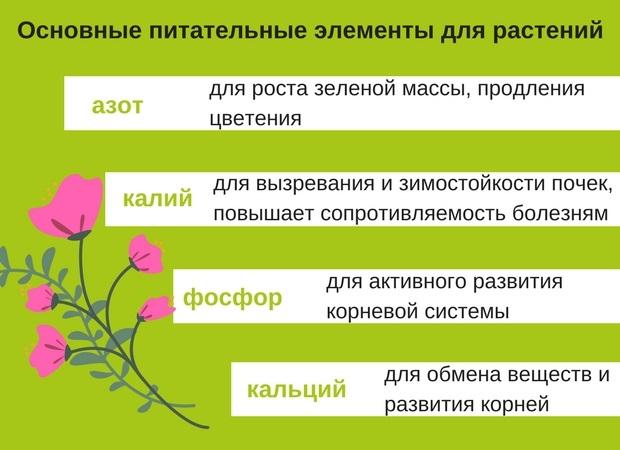 Необходимые питательные элементы для активного развития культур