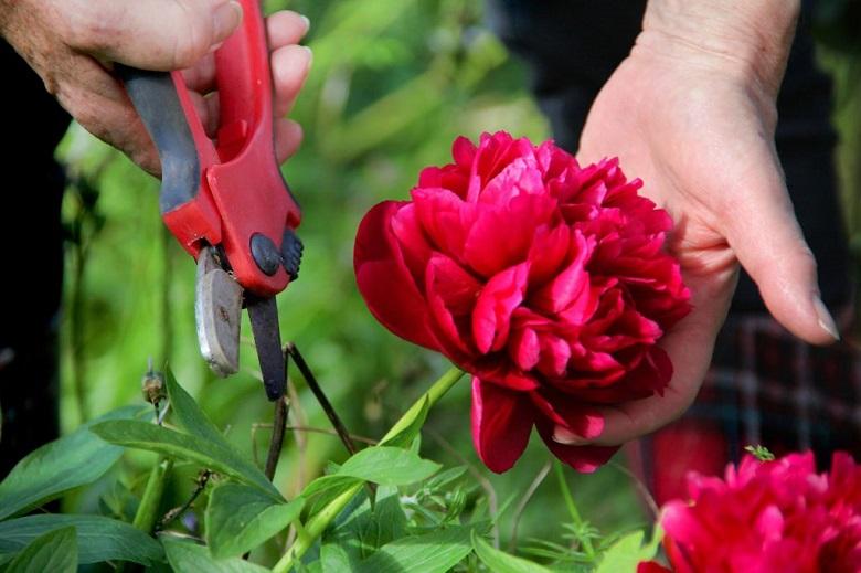 Роскошные цветы для срезки