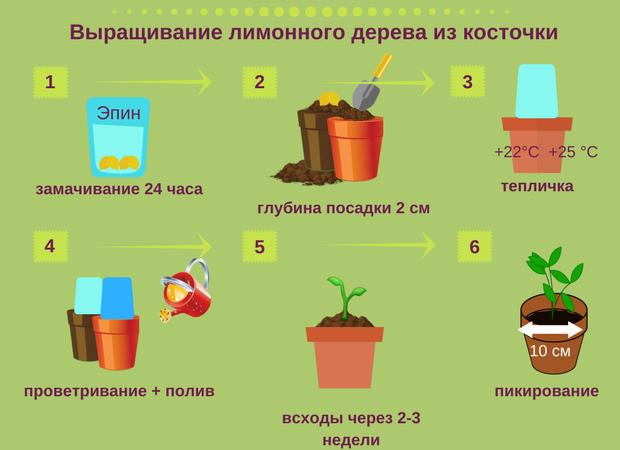 Пошаговая агротехника