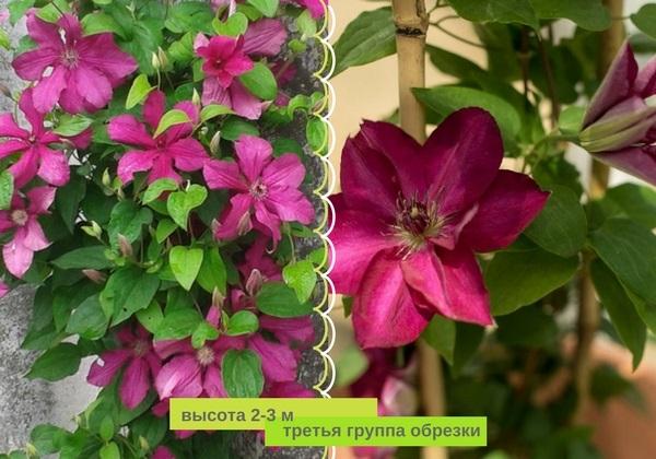 Эталон цветения