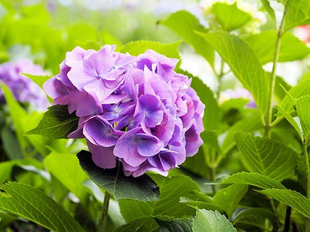 Полив и подкормки для цветения