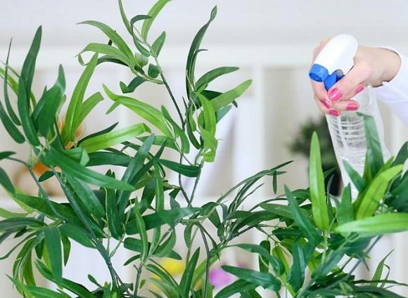 Спасение комнатных растений