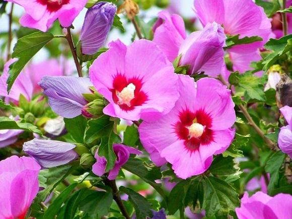 Цветение в разгар сезона
