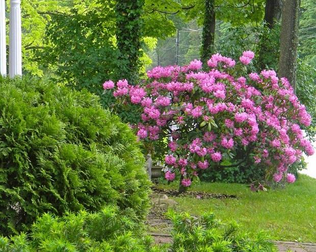 Сочетание хвойных, лиственных, цветущих