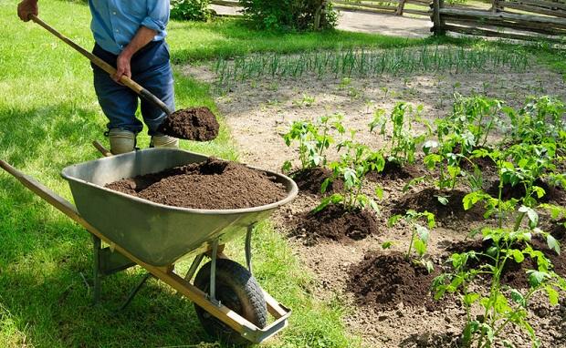 органика на огороде