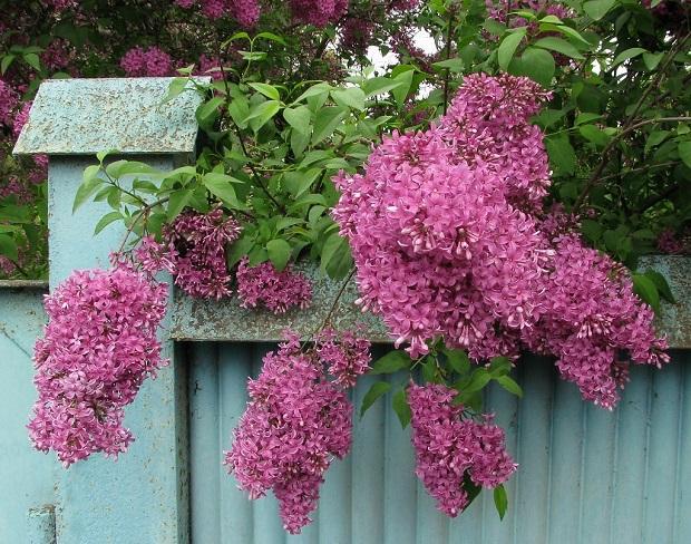 цветение после подкормки