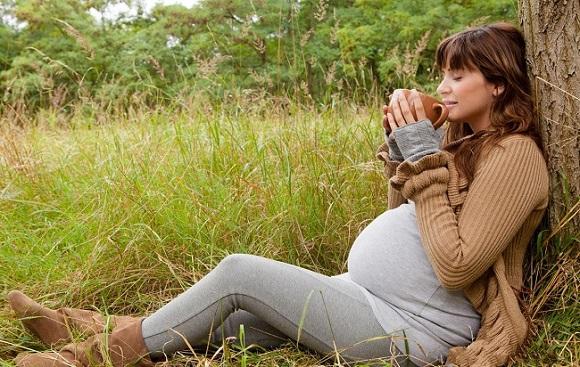 шиповник беременным