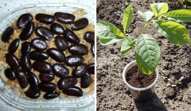 Результат выращивания из семян