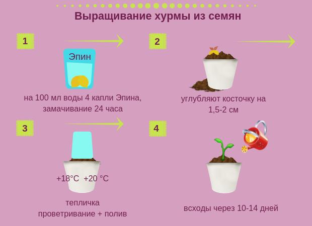 Инструкция по выращиванию