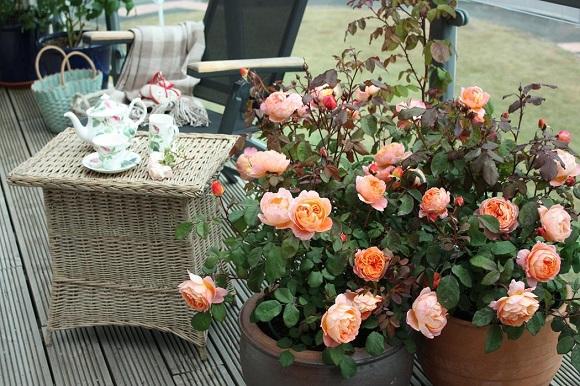 балкон с цветами