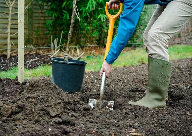 посадить сад